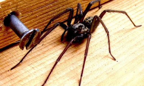 Giant Spiders In Garden Buildings