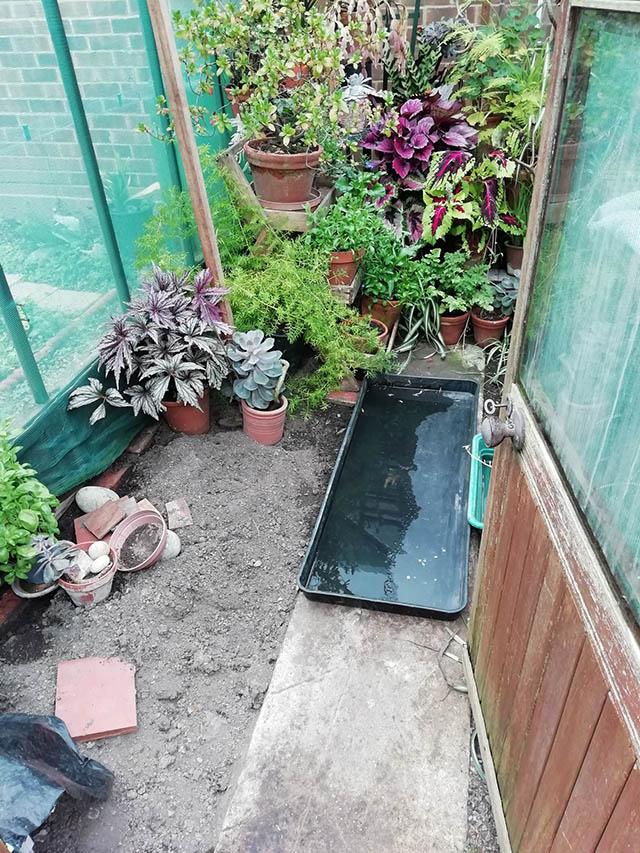 Old Greenhouse Inside - Mills